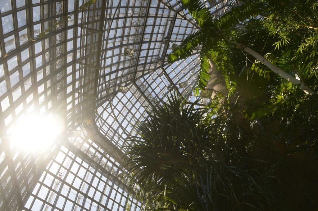 Botanischer Garten Gewächshaus