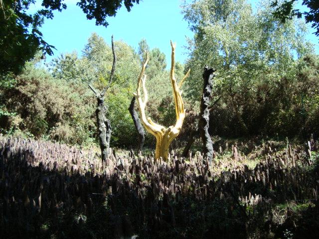 Im Wald von Brocéliande